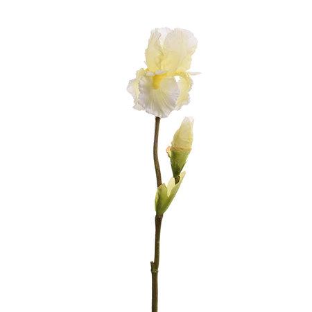 Iris Tak Creme H79