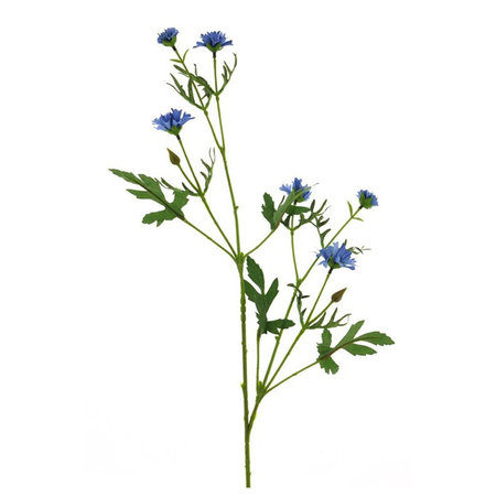 Centaurea branch