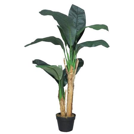 Bananenboom in pot Groen H120