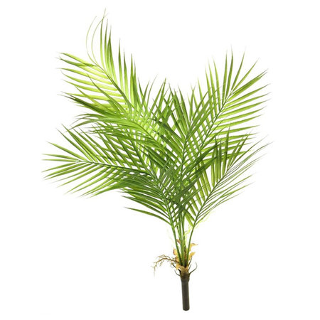 Areca palm Plug