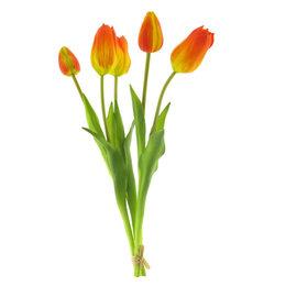 Arentzs Tulp Bundel Oranje H49