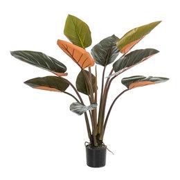 Philodendron Groen/Bordeaux H120