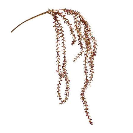 Amaranthus Tak Glitter
