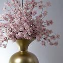 Prunus Malaga Branch