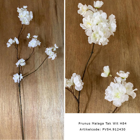 Blossom Branch Malaga
