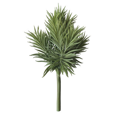Crossostephium Groot Groen H30