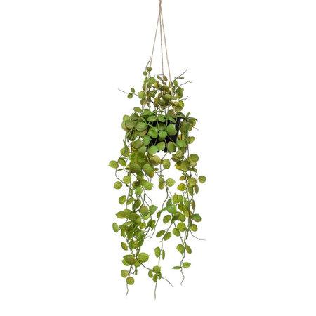 Ceropegia hangplant Groen H50