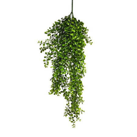 Hangplant Eucalyptus Pelaea