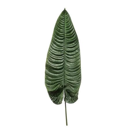 Giant Alocasia Leaf