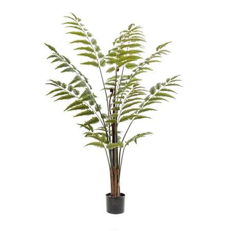 Varen palm Groen H150