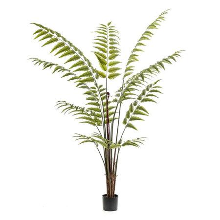 Varen palm Groen H180