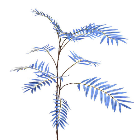 Palm branch (x10)