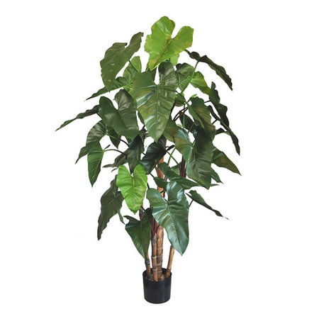Philodendron deluxe Groen H170