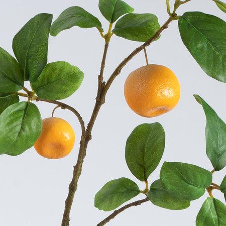 Sinaasappel fruittak