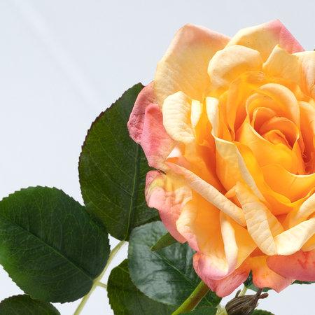 Roos Roze/oranje H68