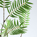 Palmblad tak Groen H154