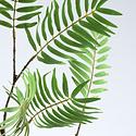 Palmblad tak (SILK-KA)