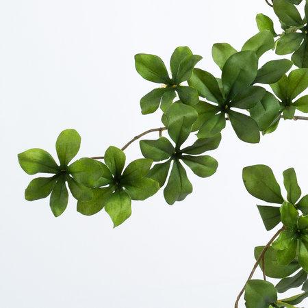 5-cloverleaf branch (SILK-KA)