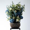 Hortensia Blauw H