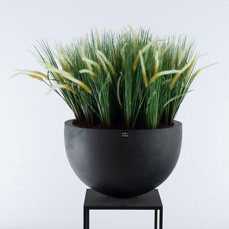 Liriope Grass Plug