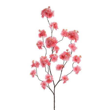 Blossom Tak