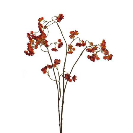 Berry branch Wild
