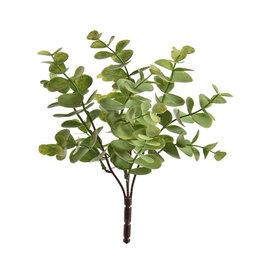 Eucalyptus plug