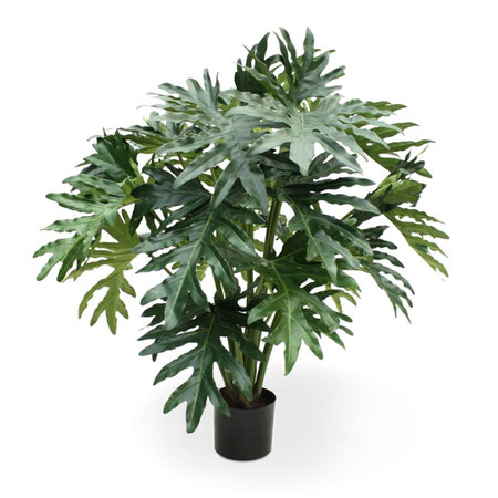 Philodendron Selloum Groen H100