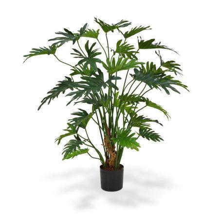 Philodendron Xanadu Groen H80