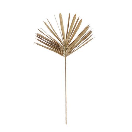 Fan palm Branch
