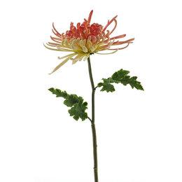 Chrysanthumum Monaco Roze H68