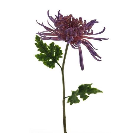Chrysanthumum Monaco