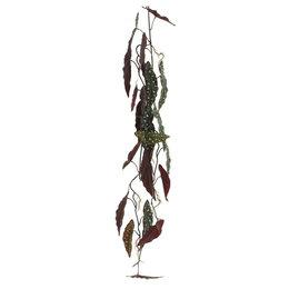 Begonia Guirlande