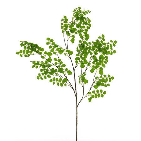 Acacia Bladtak