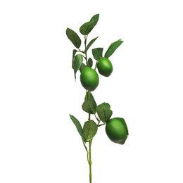 Citroentak Groen H74