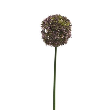 Allium Natasja tak Paars H72