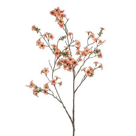 Leptospermum Tak Oranje H105