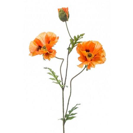 Klaproos Oranje (3-tak) H90