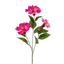 Hibiscus Tak