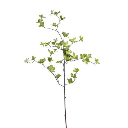 Cornus Leaf Branch