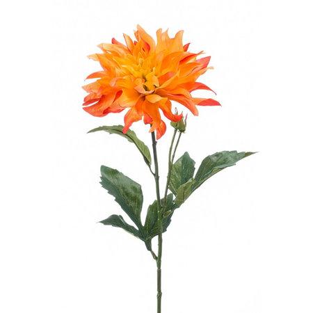 Dahlia Tak Oranje H60