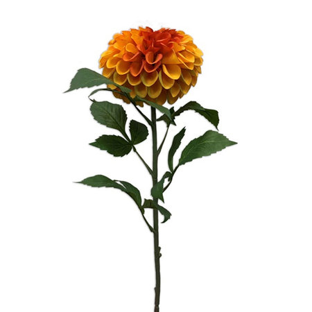 Dahlia Tak Oranje H74