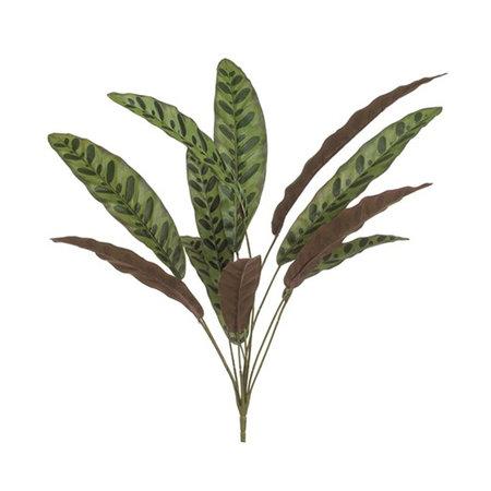 Calathea (11-tak) Groen/Bordeaux H70