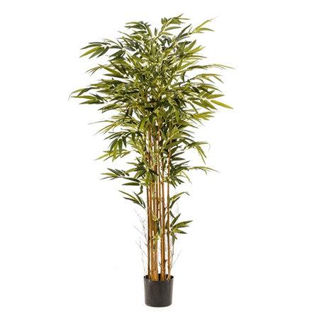 Bamboe Plant Groen H175