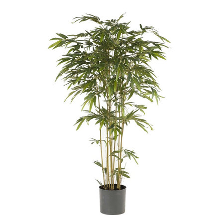 Bamboe Plant Groen H205