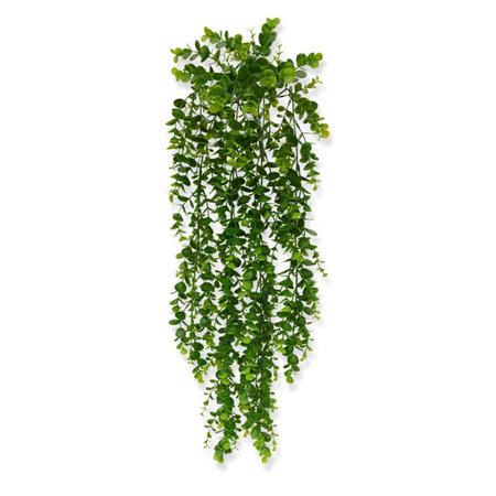 Stekers & Hangplanten