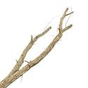 Cork branch