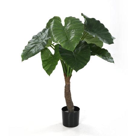 Alocasia Calidora Plant