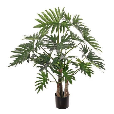 Philodendron selloum maxi Groen D130 H120