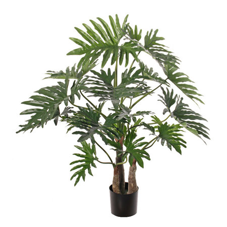 Philodendron selloum maxi